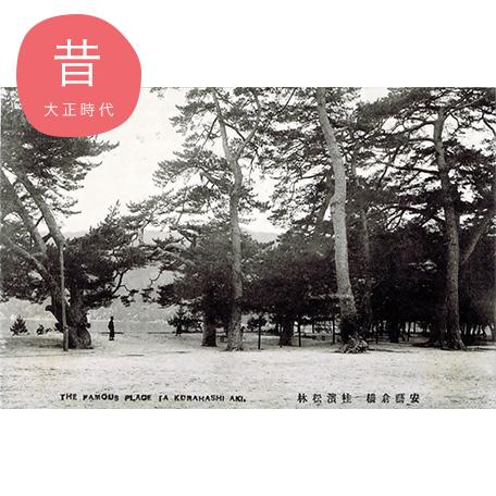 桂浜松林(大正時代)