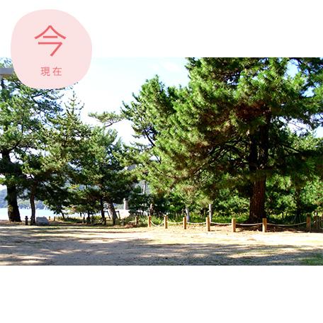 桂浜松林(現在)