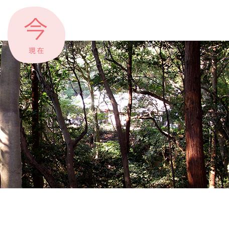 白華寺(現在)