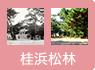 ②桂浜松林