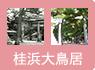⑤桂浜大鳥居